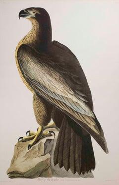 Bird of Washington, Edition Pl. 11