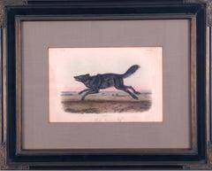"""Black American Wolf"" Audubon Animal Wildlife"