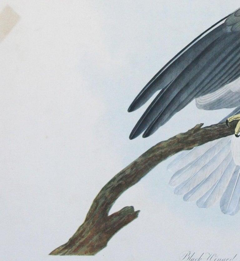 White Hawk 8 x 10 print watercolor audubon birder abstract Bird Outdoor birder Nature art