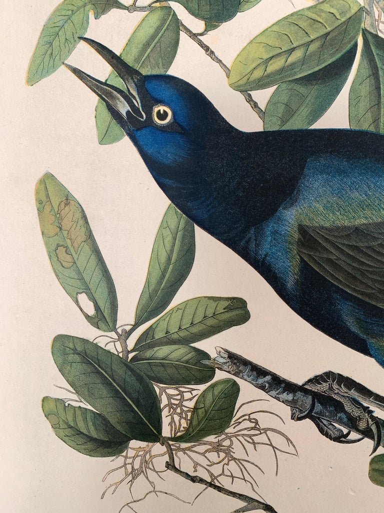 Boat-tailed Grackle, from the Bien edition of Birds of America - Beige Animal Print by John James Audubon