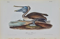 """Brown Pelican"", an Original First Edition Audubon Hand Colored Lithograph"
