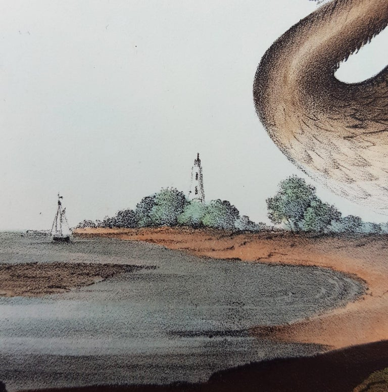 Brown Pelican For Sale 7