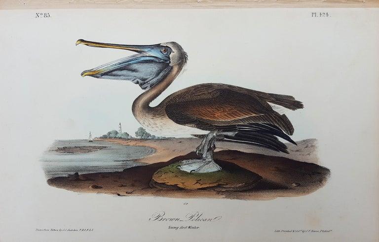Brown Pelican - Print by John James Audubon