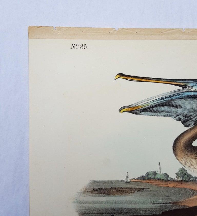 Brown Pelican - Gray Animal Print by John James Audubon