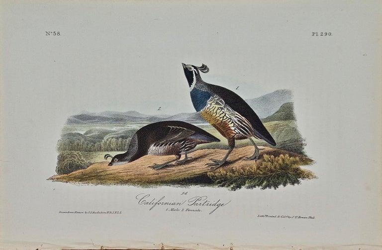 "John James Audubon Animal Print - ""Californian Partridge"", Hand Colored Lithograph, J.T. Bowen Edition"
