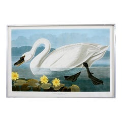 Common American Swan Plate #411 Havell Oppenheimer Edition