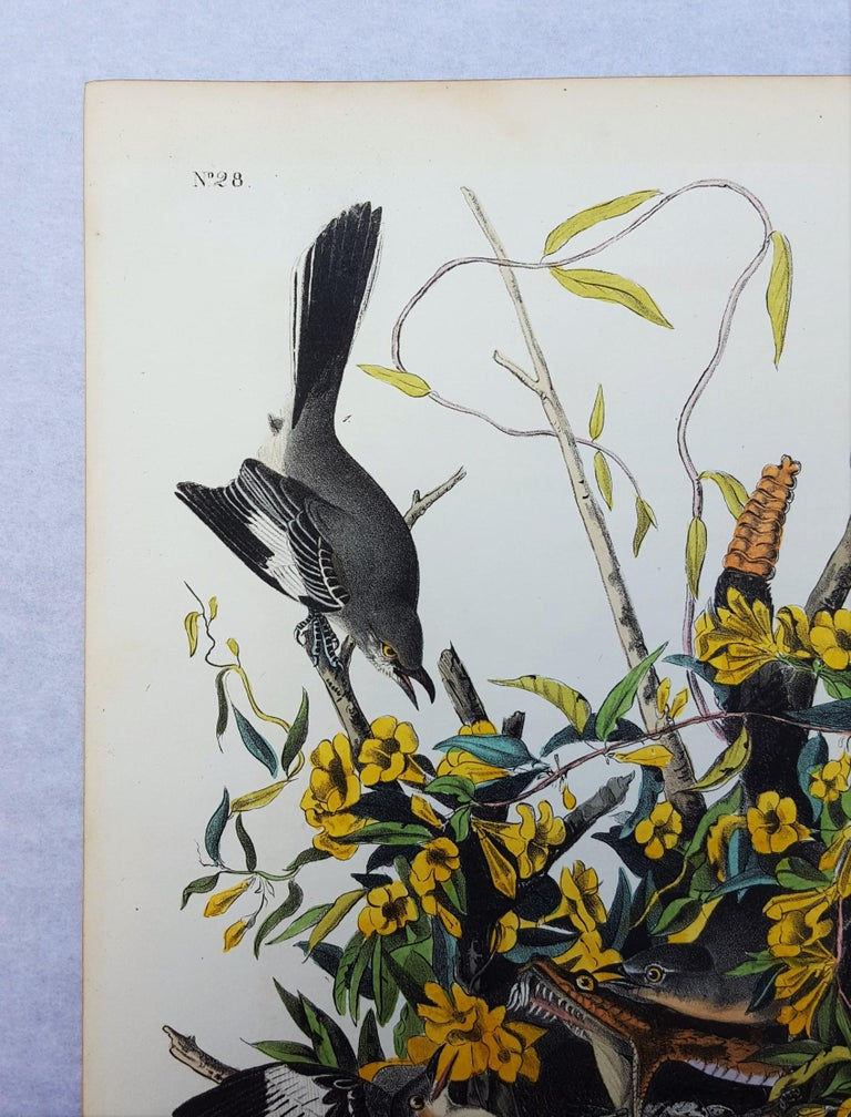 An original hand-colored lithograph on wove paper by American artist John James Audubon (1785-1851) titled