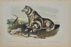 """Esquimaux Dog"", an Original 19th C. Audubon Hand Colored Quadruped Lithograph"