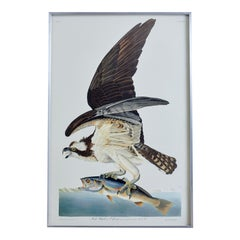 Fish Hawk or Osprey Plate #81 Havell Oppenheimer Edition