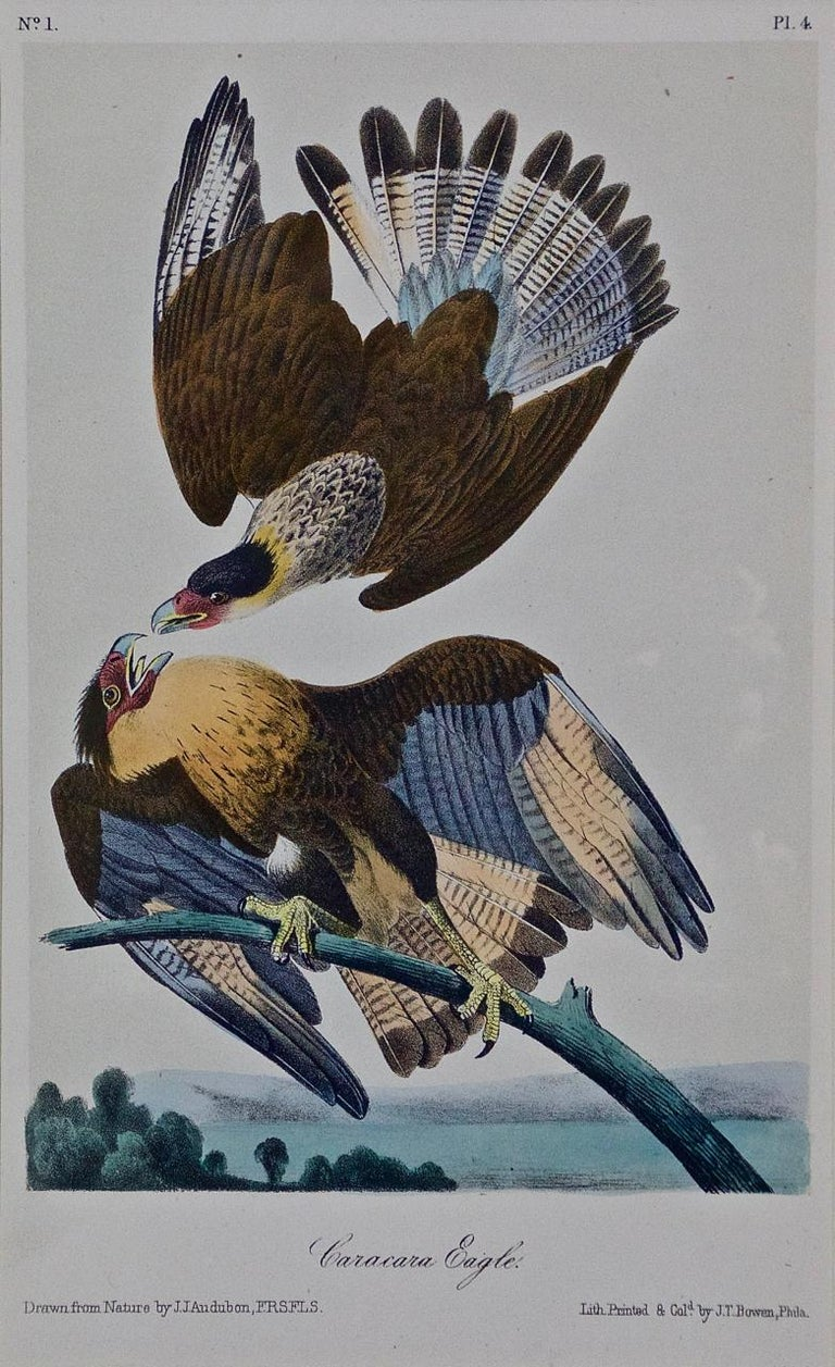 Framed Original Audubon Hand-Colored Bird Lithograph of Caracara Eagles - Print by John James Audubon