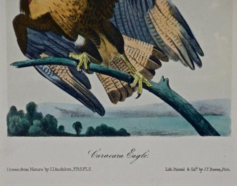Framed Original Audubon Hand-Colored Bird Lithograph of Caracara Eagles - Gray Animal Print by John James Audubon
