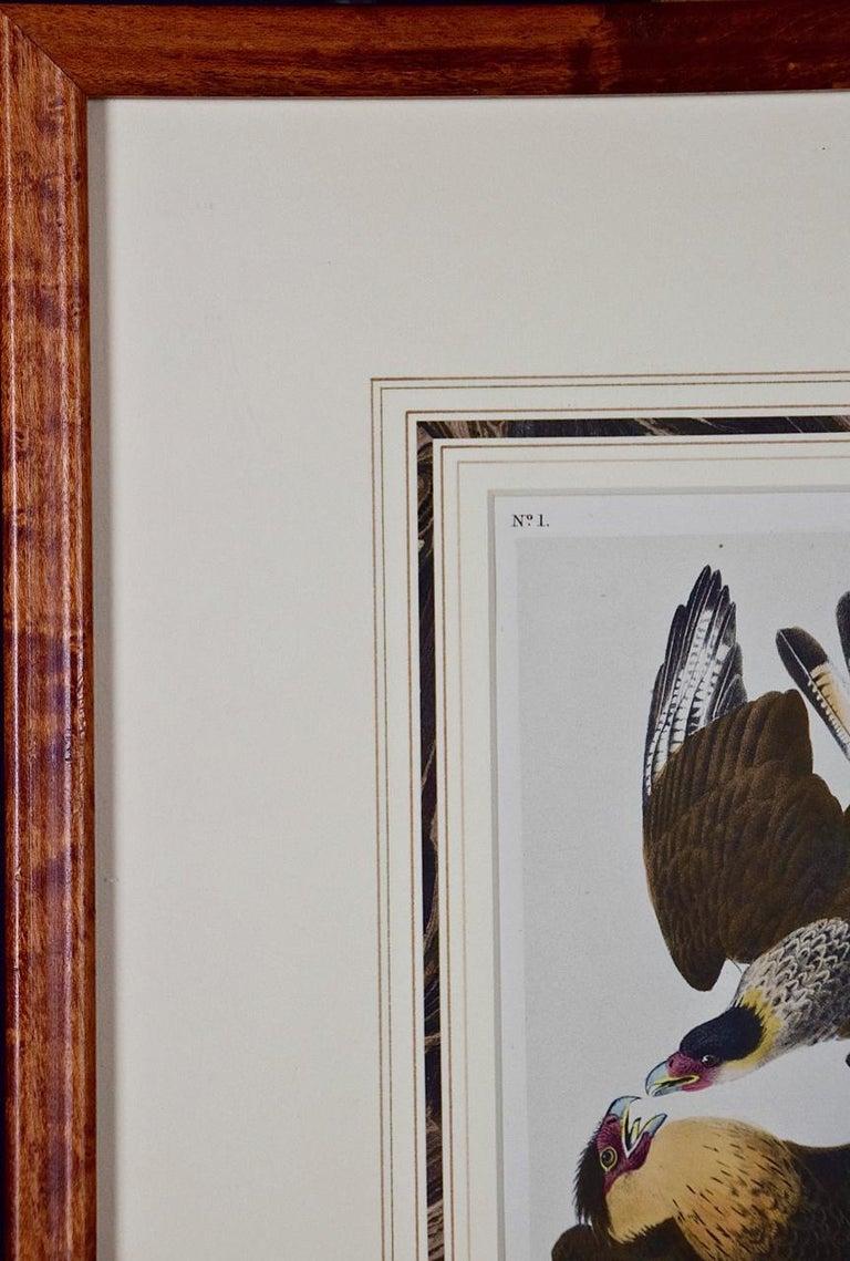 An original John James Audubon hand finished lithograph entitled