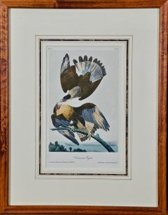 Framed Original Audubon Hand-Colored Bird Lithograph of Caracara Eagles
