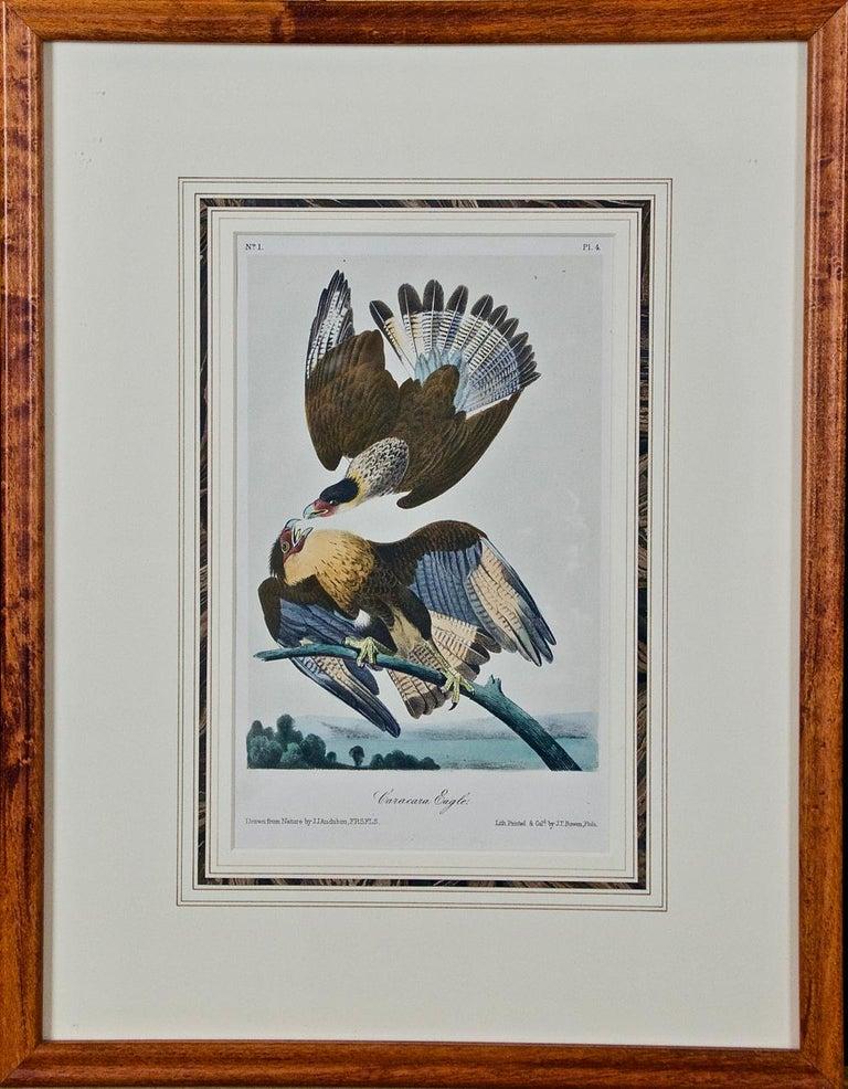 John James Audubon Animal Print - Framed Original Audubon Hand-Colored Bird Lithograph of Caracara Eagles