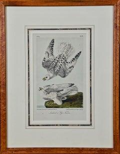 Framed Original Audubon Hand Colored Bird Lithograph of Iceland or Gyr Falcons