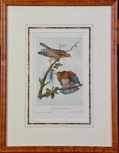 Framed Original Audubon Hand Colored Bird Lithograph of Red Shouldered Buzzards