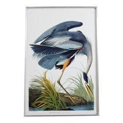 Great Blue Heron Plate #211 Havell Oppenheimer Edition