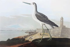 Greenshank (View of St. Augustine & Spanish Fort East Florida)