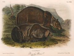 Grizzly Bear by Audubon