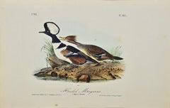 """""""Hooded Merganser"""", an Original First Edition Audubon Hand Colored Lithograph"""