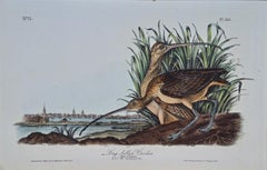 """Long-billed Curlew"", an Original First Edition Audubon Hand Colored Lithograph"
