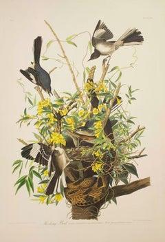 Mocking Bird, Edition Pl. 21