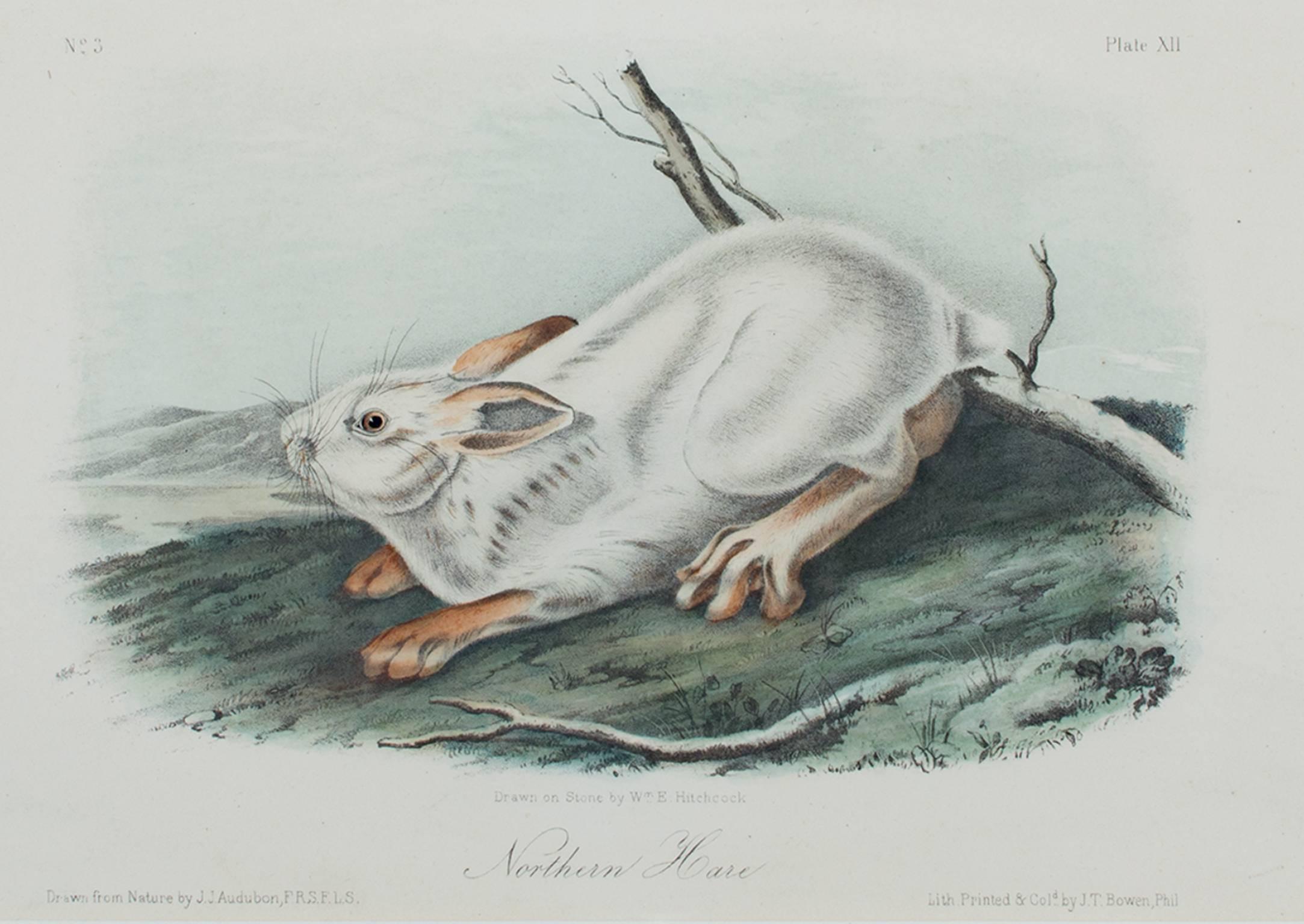 """Northern Hare,"" Original Color Lithograph by John James Audubon"