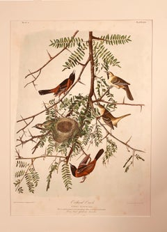 Orchard Oriole, from the Bien edition of Birds of America