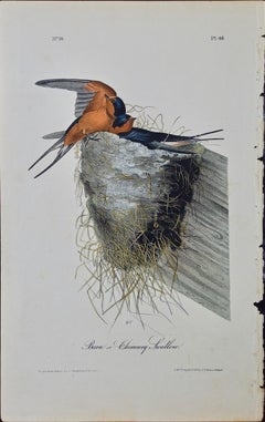 "Original Audubon Hand Colored Bird Lithograph of ""Barn or Chimney Swallow"""