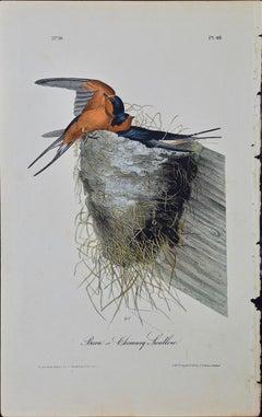 "Original Audubon Hand Colored Bird Lithograph of ""Barn or Chimney Swallow"""