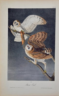 An Original Audubon Hand-colored Bird Lithograph of Barn Owls