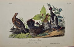 "Original Audubon Hand Colored Bird Lithograph of ""Canada Grouse"""