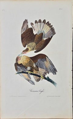 "Original Audubon Hand Colored Bird Lithograph of ""Caracara Eagle"""