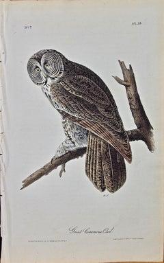 "Original Audubon Hand Colored Bird Lithograph of ""Great Cinereous Owl"""