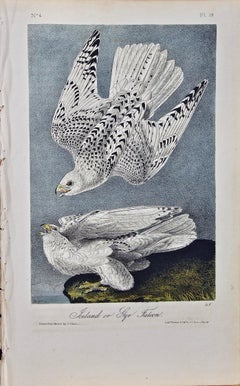 "Original Audubon Hand Colored Bird Lithograph of ""Iceland or Gyr Falcon"""