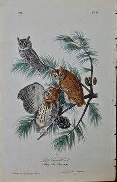 """Original Audubon Hand Colored Bird Lithograph of """"Little Screech Owl"""""""