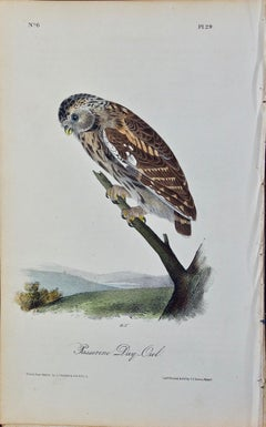 "Original Audubon Hand Colored Bird Lithograph of ""Passerine Day-Owl"""