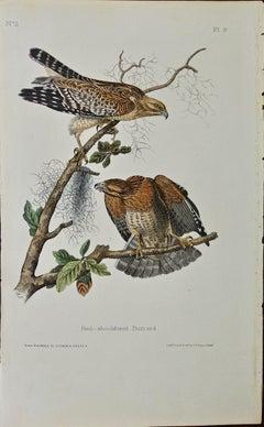 "Original Audubon Hand Colored Bird Lithograph of ""Red-shouldered Buzzard"" (Hawk)"