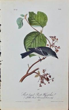 "Original Audubon Hand Colored Bird Lithograph ""Short-legged Pewit Flycatcher"""