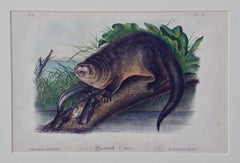 "Original Audubon Hand Colored Lithograph of ""Canada Otter"""