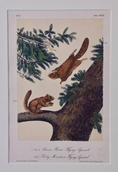 """Original Audubon Hand Colored Lithograph of """"Flying Squirrels"""""""