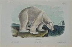 """Polar Bear"", an Original 19th C. Audubon Hand Colored Quadruped Lithograph"
