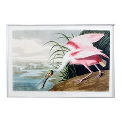 Roseate Spoonbill Plate #321 Havell Oppenheimer Edition