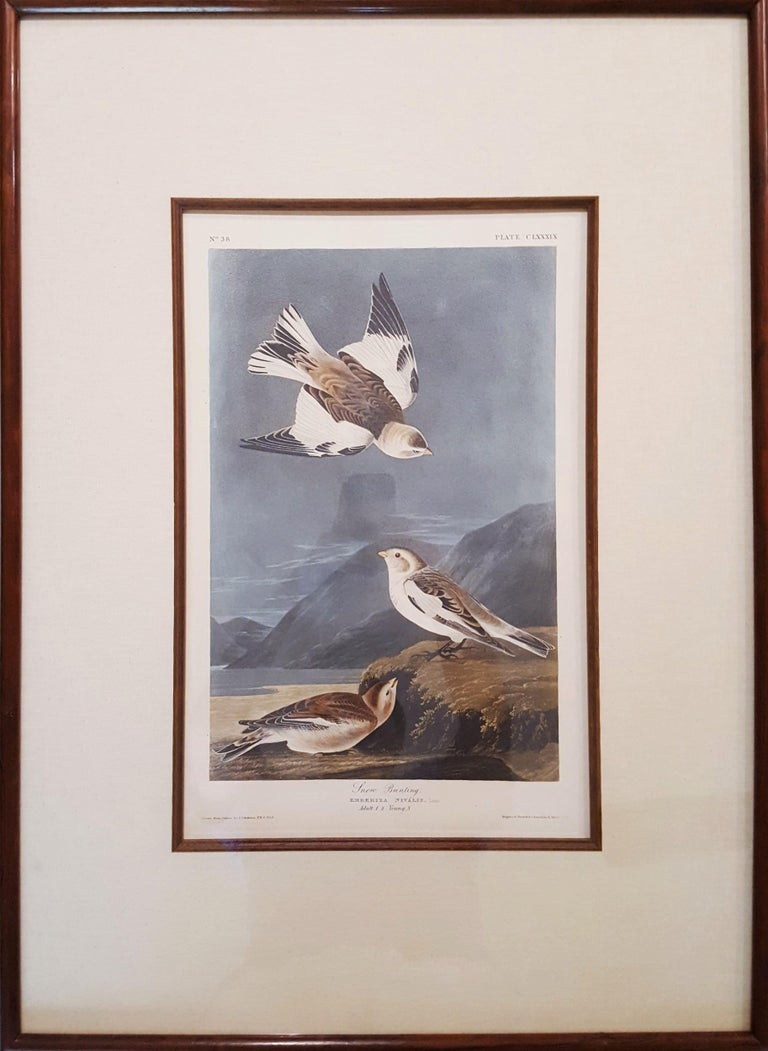 Snow Bunting - Victorian Print by John James Audubon