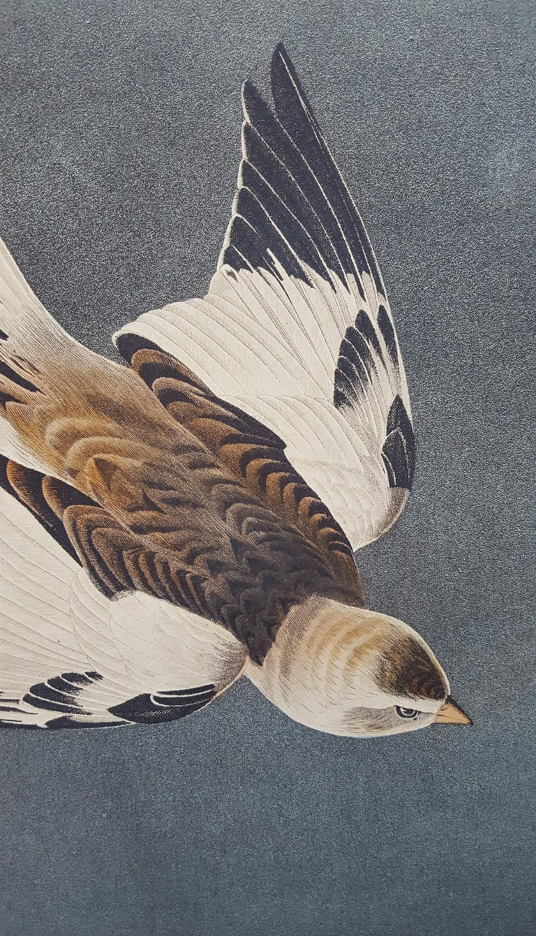 Snow Bunting For Sale 9