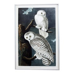 Snowy Owl Plate #121 Havell Oppenheimer Edition