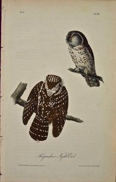 """Tengmalm's Night-Owl"", Original First Edition Audubon Hand Colored Lithograph"