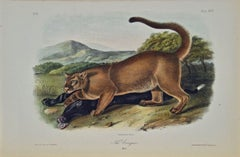 """The Cougar"", an Original 19th C. Audubon Hand Colored Quadruped Lithograph"