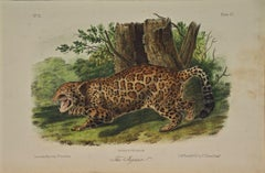 """The Jaguar"", an Original 19th C. Audubon Hand Colored Quadruped Lithograph"