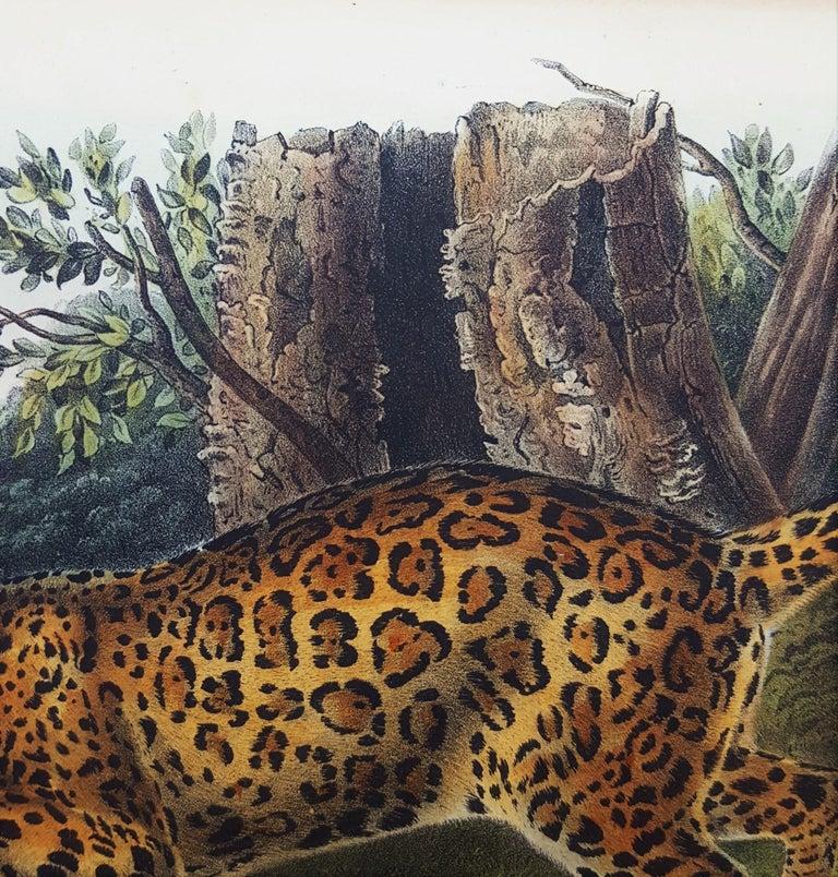 The Jaguar For Sale 5